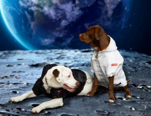 """Четвероногим модникам очень повезло: Heron Preston и NASA выпустили """"космическую"""" коллекцию одежды для собак (ФОТО)"""