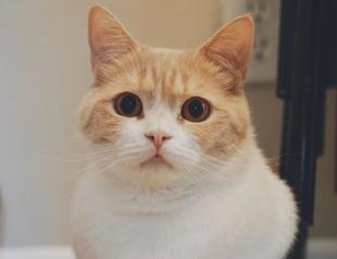 Кот перепел Билли Айлиш и стал звездой Сети (ВИДЕО)