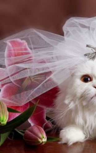 Стоит ли брать на свадьбу домашних животных?