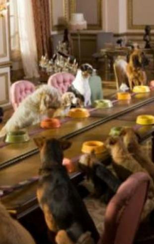 Гостиницы для домашних животных: как выбрать?