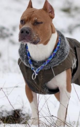 Тренды собачьей моды зимы 2013