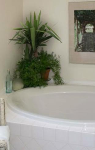 Как выбрать растения для ванной комнаты