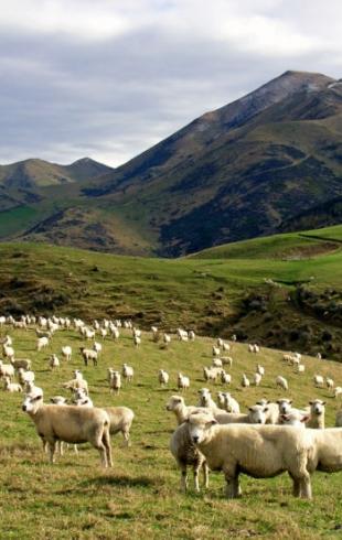 Почему вам стоит поехать в Новую Зеландию