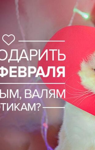 Девушкам, парням и даже котикам: что подарить на День святого Валентина