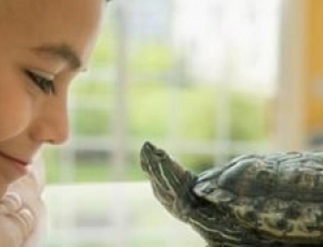 О каких домашних животных мечтают дети?