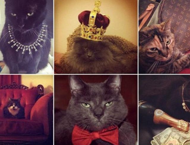Самые гламурные коты и кошки интернета. Фото