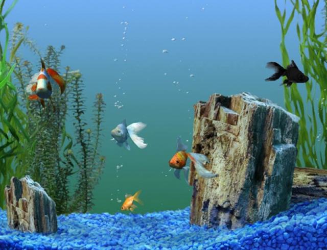 Первый аквариум: какие растения выбрать?