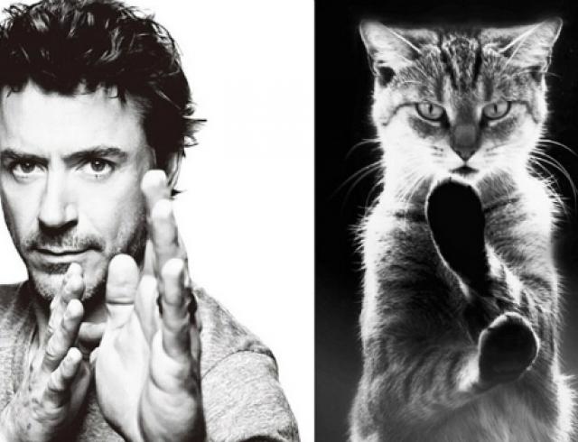 Звезды и коты: неожиданные двойники. Фото