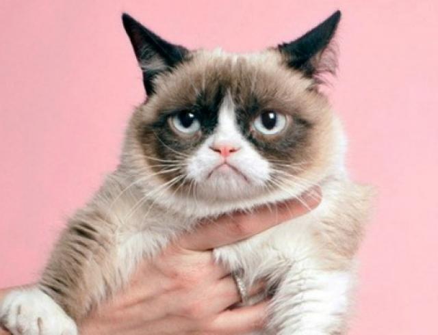 Угрюмый кот стал лицом Prada