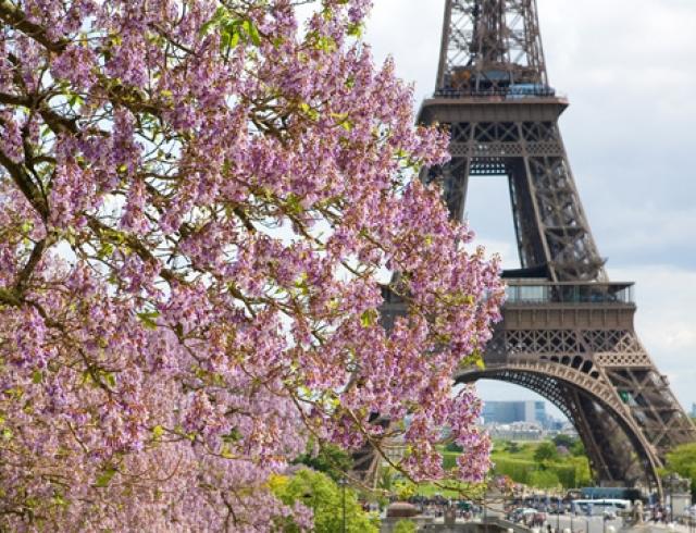 Французская весна в Киеве: расписание мероприятий