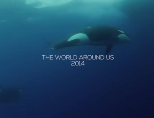 Какими были самые важные моменты 2014 года. Видео