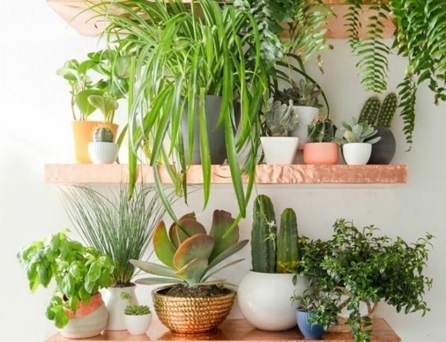 Домашняя оранжерея: выбираем красивые и полезные комнатные растения (очищающие, бактерицидные, увлажняющие)
