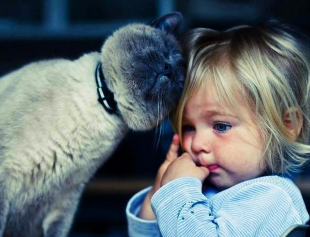 После ЭТОГО вы точно захотите иметь кошку в доме!