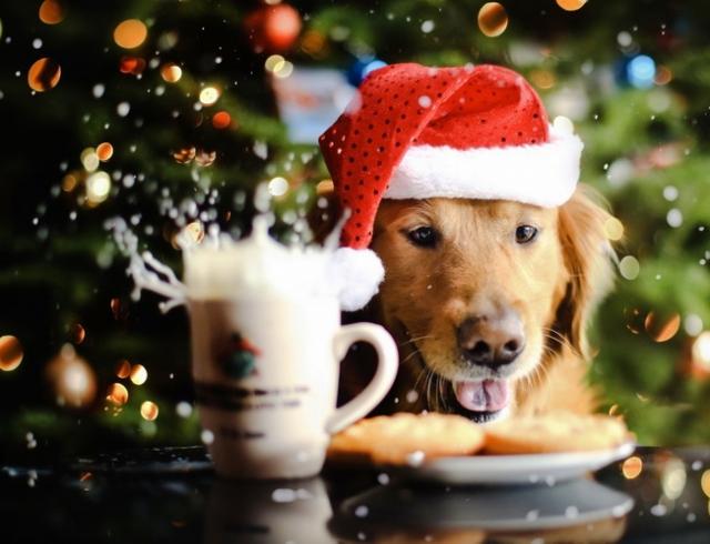 Главные правила встречи года Желтой Земляной Собаки: декор дома, новогоднее меню, где и с кем встречать