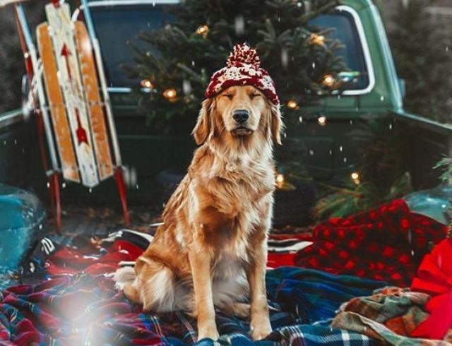Гороскоп на 31 декабря 2017: только елки ненавидят Новый год