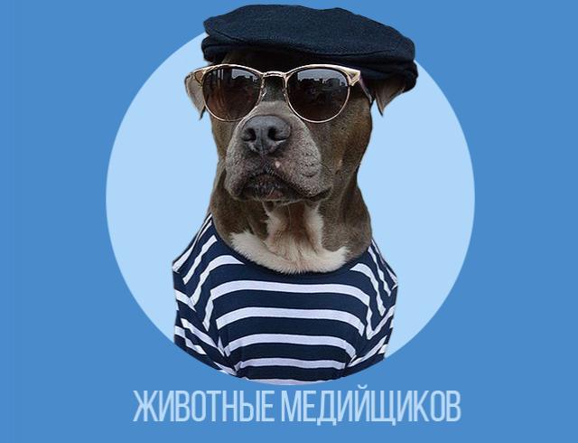 Домашние любимцы украинской медиа-тусовки