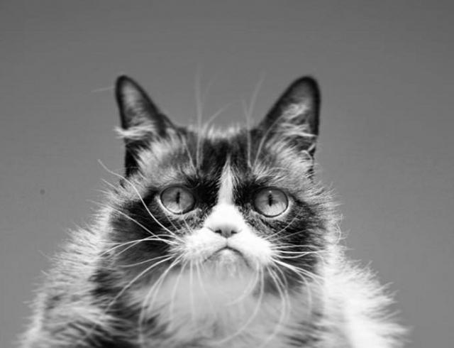 Умерла кошка Grumpy Cat: звезда мемов скончалась на седьмом году жизни