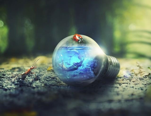И лампа не горит! Украина присоединится к международной экологической акции Час Земли